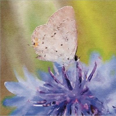 The Butterfly Ball by Kathryn Trainor for Milkbarn Kids